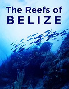 The Reefs of Belize